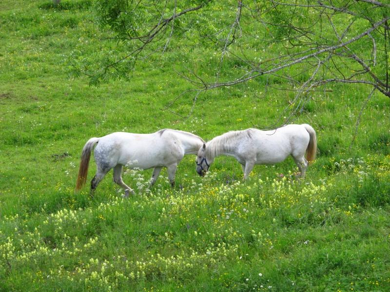 Združitev konj