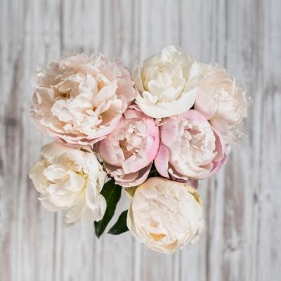 Šopek.si, dostava rož na dom
