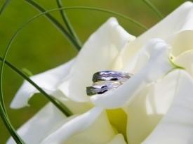 Poročna prstana in poročni šopek.