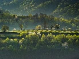 Lepa pokrajina Goriške Brde za poročno pogostitev.