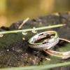 Sanjska poroka Monike in Boruta, poroka, ona-on.com, poročni prstan
