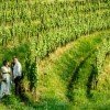 Poroka med vinogradi